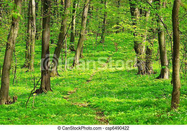 green forest background - csp6490422