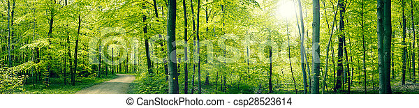 Green forest panorama landscape - csp28523614