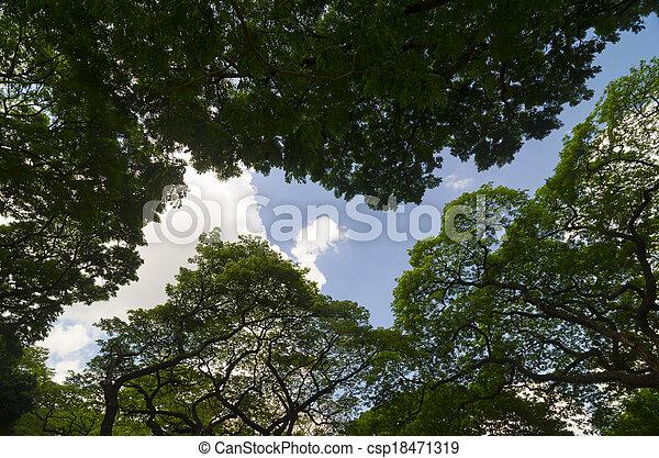 green forest - csp18471319