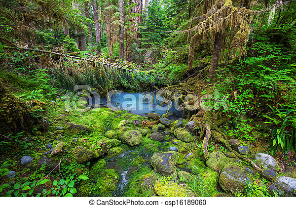 Green forest - csp16189060