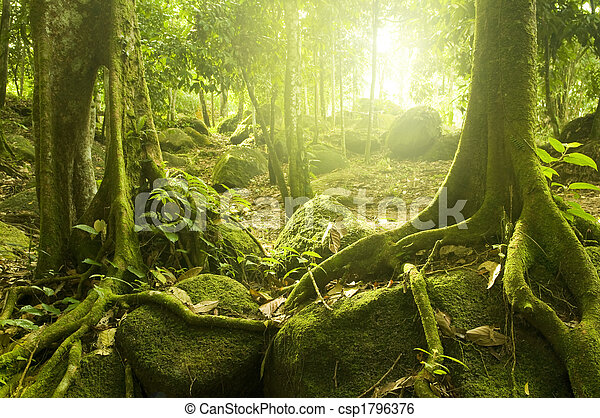 Green forest - csp1796376
