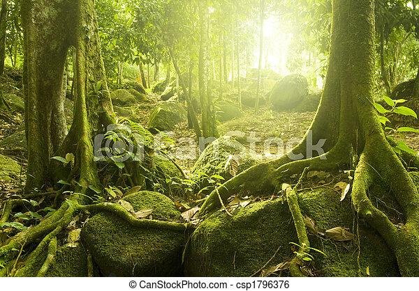 Green forest - csp1796376