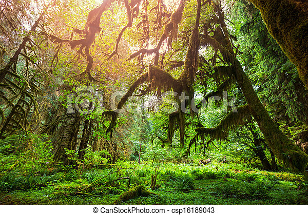 Green forest - csp16189043