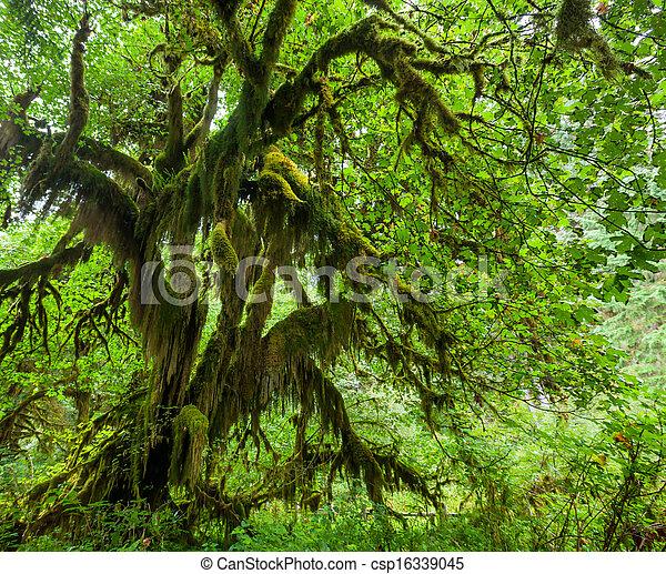 Green forest - csp16339045