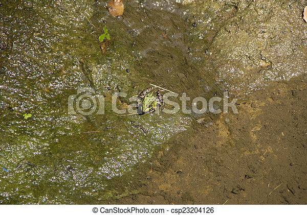 Green Frog in Water - csp23204126