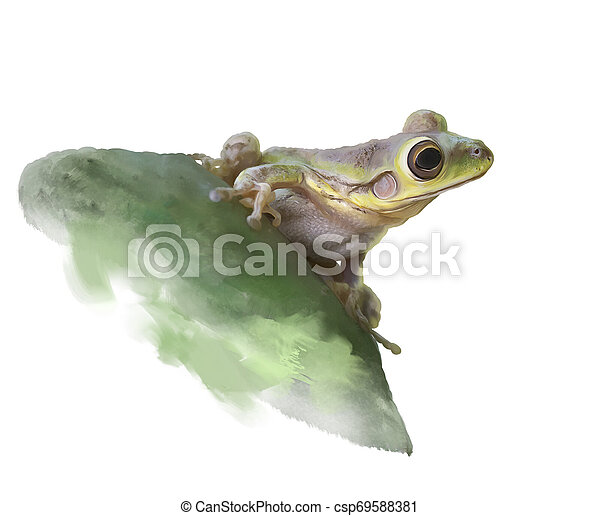 Green Frog on a cactus, watercolor - csp69588381
