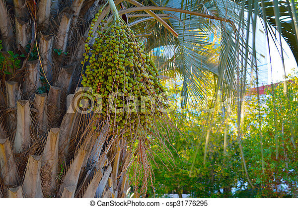 green fruit on the palm, in a bundle - csp31776295