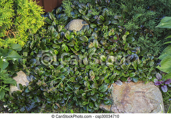 Green Garden Background With Flora Combination Nature Background