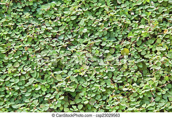 Green garden hedge pattern wallpaper stock image - Search Photos and ...