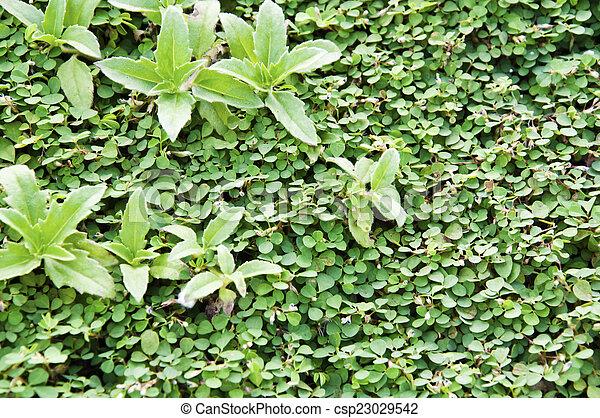 Green garden hedge pattern wallpaper stock photo - Search ...