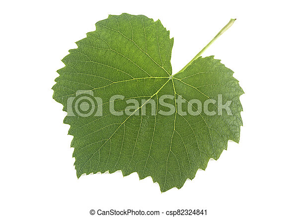 Green grape leaf isolated on a white background - csp82324841
