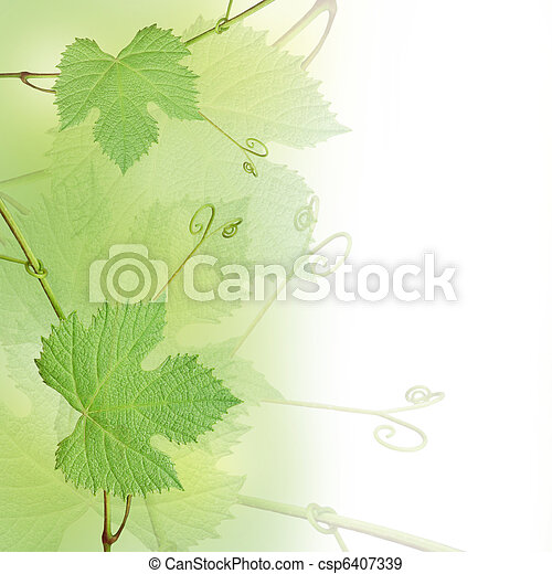 Green Grape Leaves Background Green Grape Leaves Border Isolated On A White Background Canstock