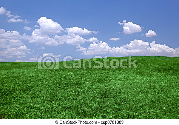Green grass and blue sky  - csp0781383