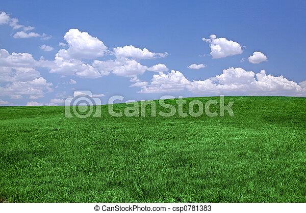 Green grass and blue sky - csp0781383