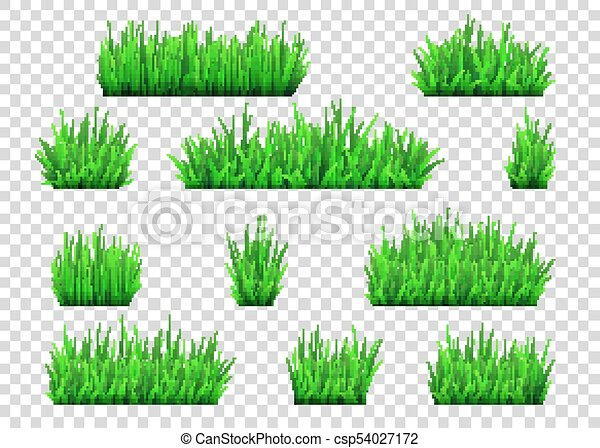Green Grass And Bushes Isolated On Transparent Background Vector