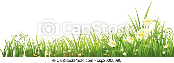 Green grass and flowers - csp26008090