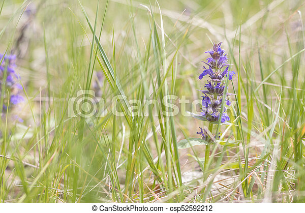 Green grass and tender blue flowers in the field - csp52592212