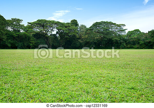 Green grass and trees - csp12331169