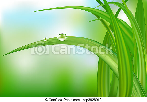 Green Grass And Water Drops. - csp3928919