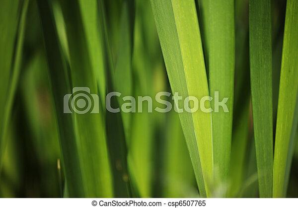 Green grass background - csp6507765