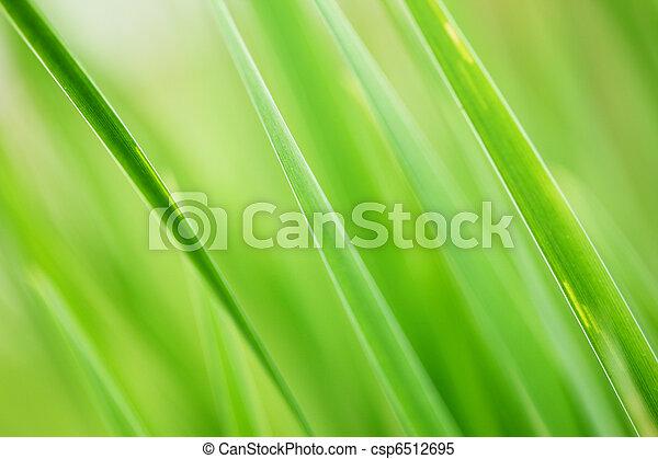 Green grass background - csp6512695