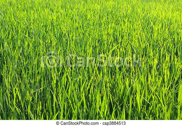 Green grass background - csp3884513
