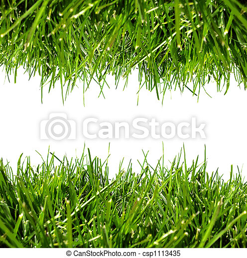 Green grass border on a white background with clear space for text - csp1113435