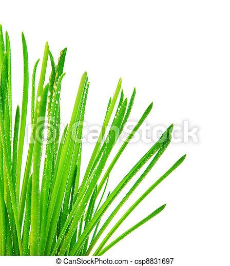 green grass border fresh spring herbal leaves abstract wet rh canstockphoto com Herb Clip Art Heart Lemon Herb Butter Clip Art