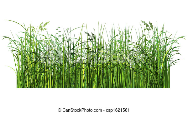 Green grass. Illustrated green grass. image contains clipping path for easier cropping.