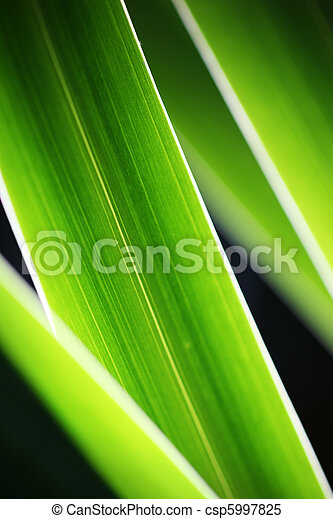 Green grass close-up abstract background - csp5997825