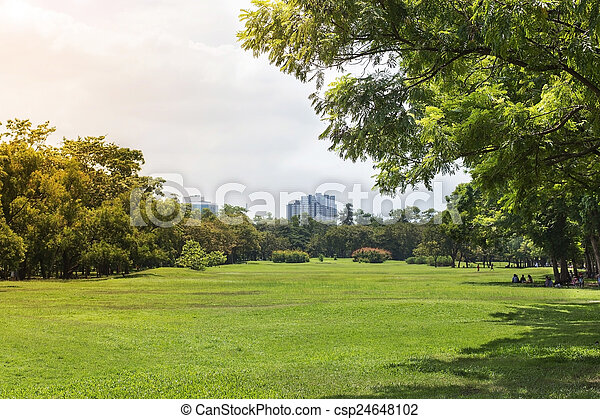 green grass field and trees in park - csp24648102