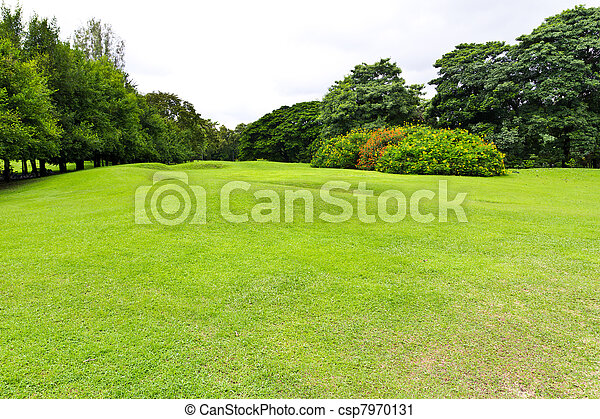 green grass field in the park - csp7970131