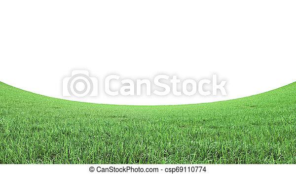 green grass field on white background 3D rendering - csp69110774