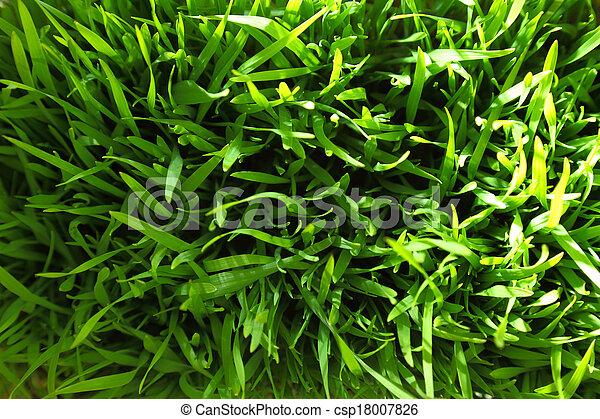 Green grass fresh background  - csp18007826