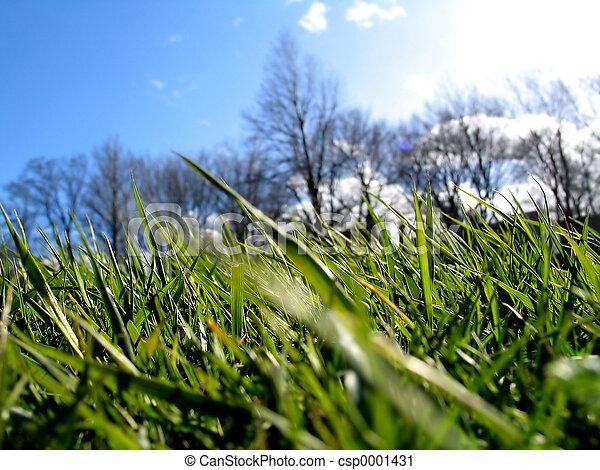 Green Grass II - csp0001431