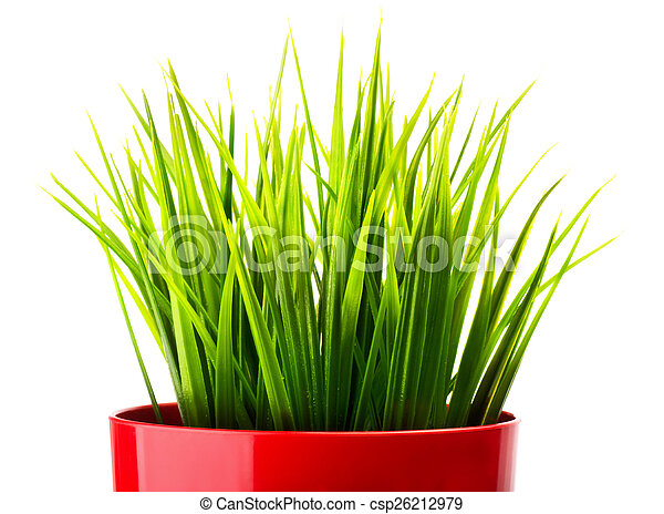 Green grass in a red pot - csp26212979