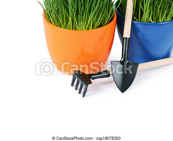 Green grass in pot isolated on white background - csp19078350