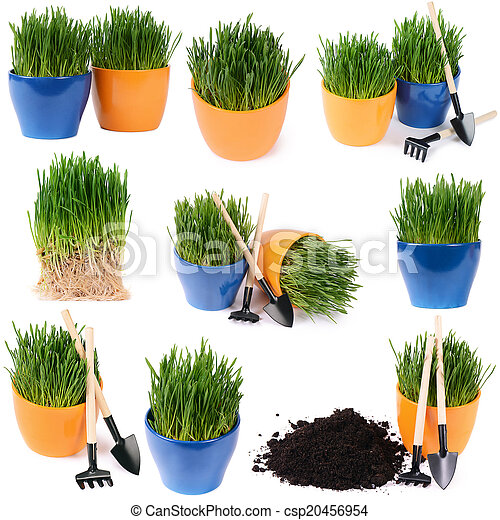 Green grass in pot isolated on white background - csp20456954