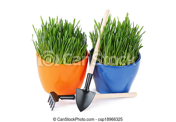Green grass in pot isolated on white background - csp18966325
