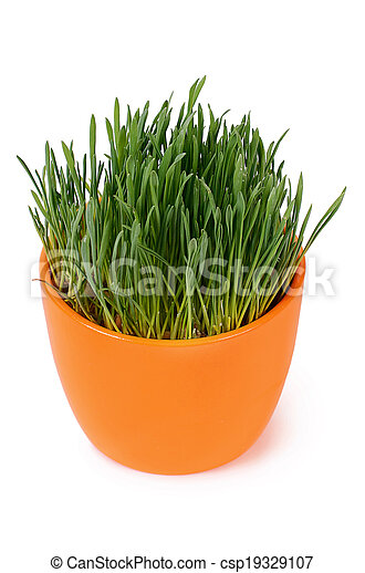 Green grass in pot isolated on white background - csp19329107