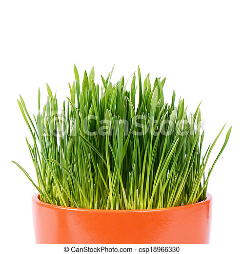 Green grass in pot isolated on white background - csp18966330