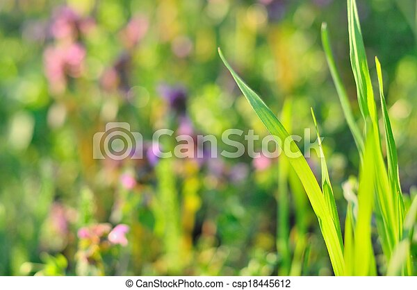 Green grass in spring time - csp18445612