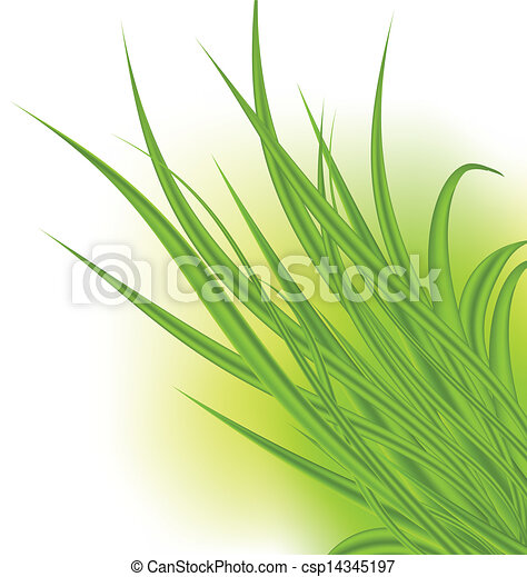 Green grass isolated on white background - csp14345197