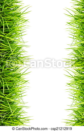 Green grass isolated on white - csp21212919
