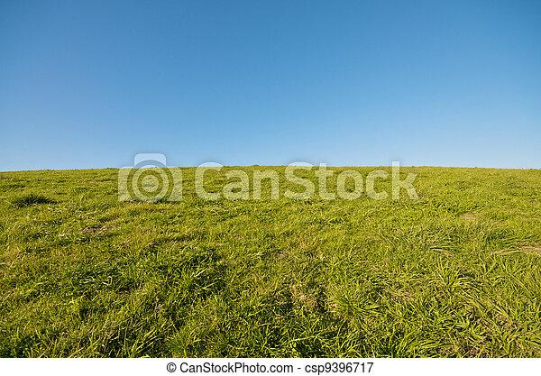 Green Grass Landscape and blue sky - csp9396717