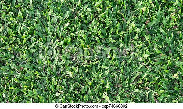 Green grass on background - csp74660892