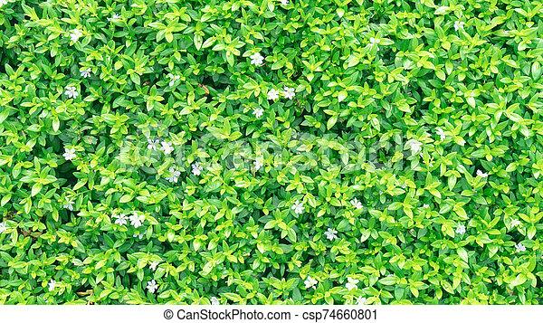 Green grass on background - csp74660801