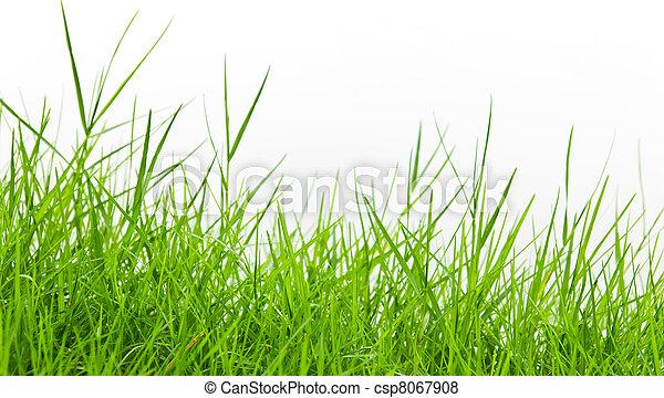 green grass on white background - csp8067908