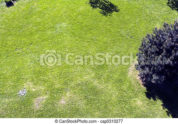 green grass - csp0310277