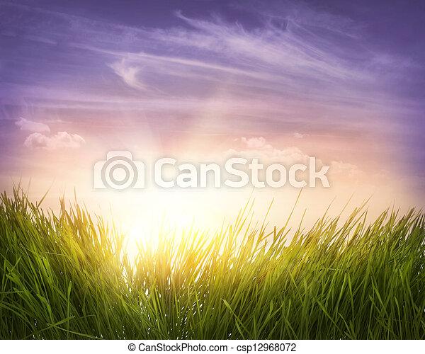 Green grass - csp12968072